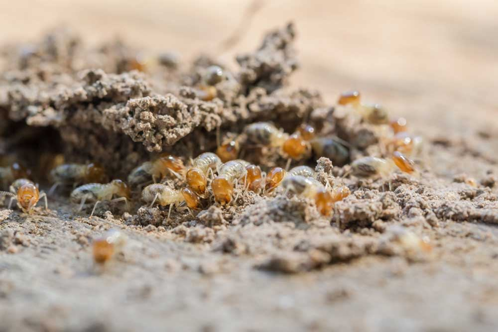 Keeping Termites Out Of Mulch: Preventative and Corrective