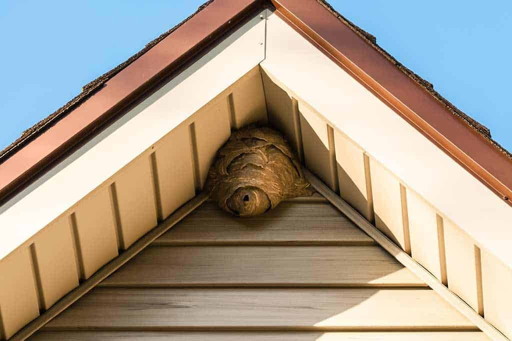 Wasp Nest On A House
