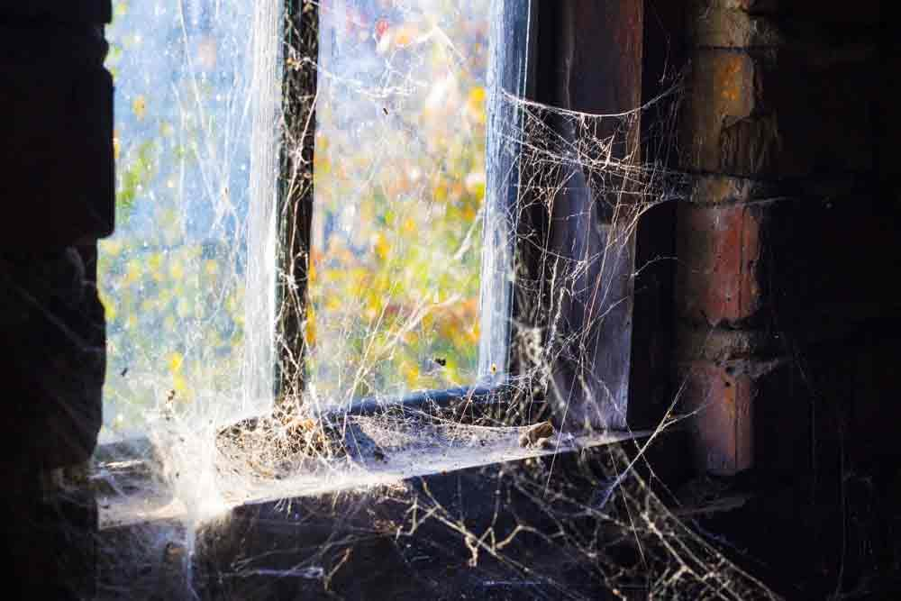 Spider Web By Dirty Window