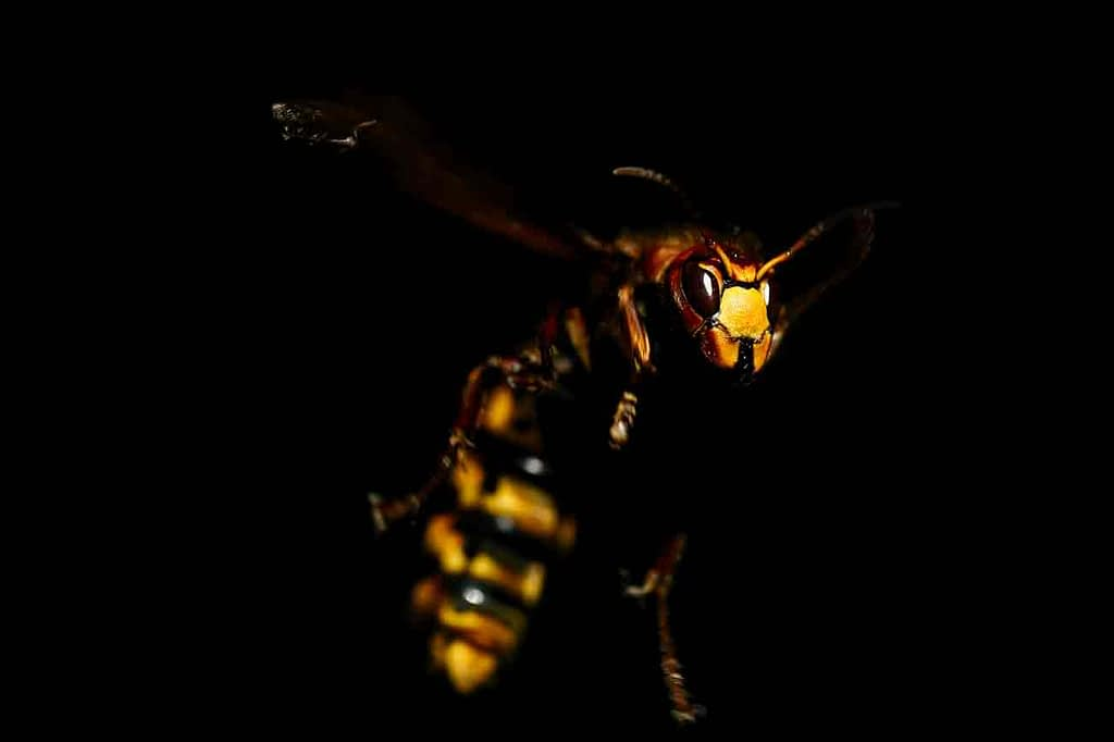 Do Wasps Attack At Night?