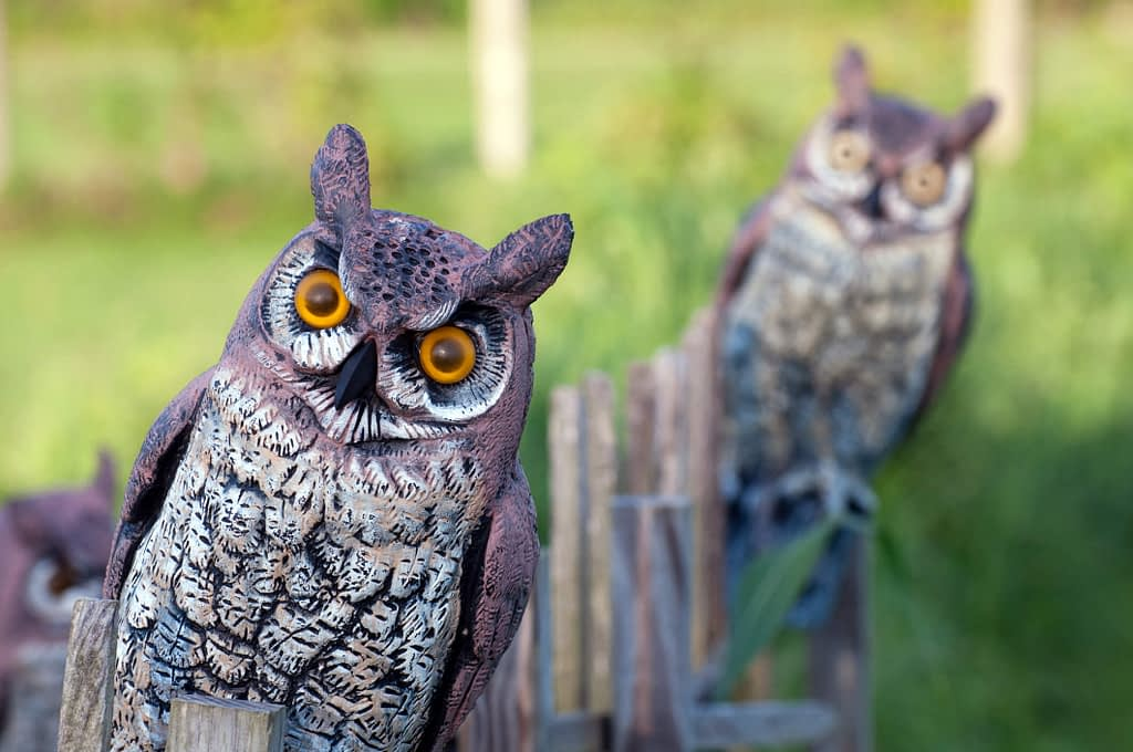 Do Fake Owls Actually Work to Keep Pests Away?