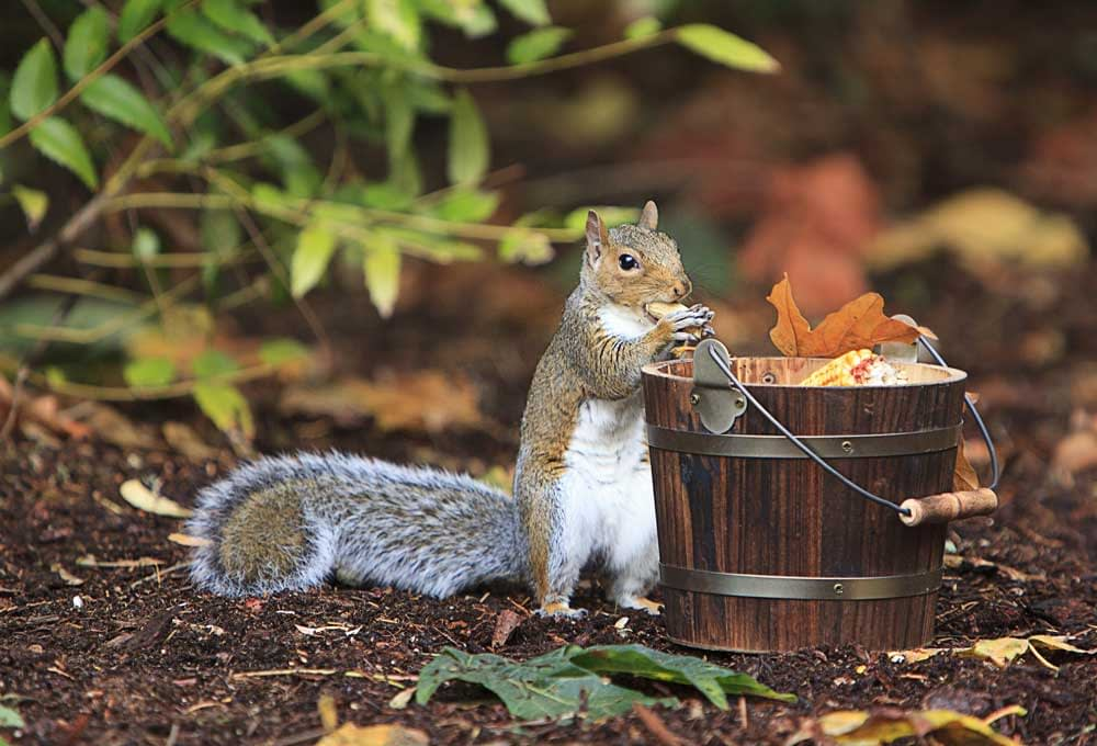 Tips To Keep Squirrels Out Of Your Garden and OFF Your Yard