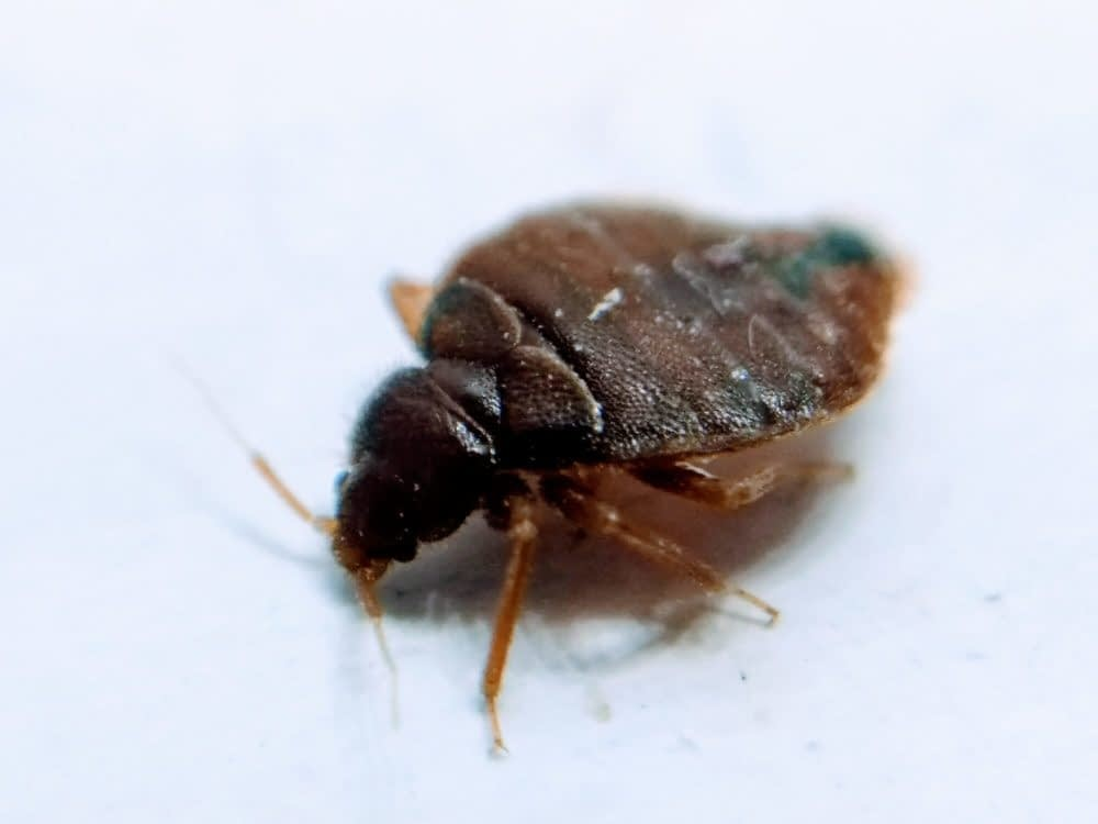 How to Avoid Getting Bed Bugs