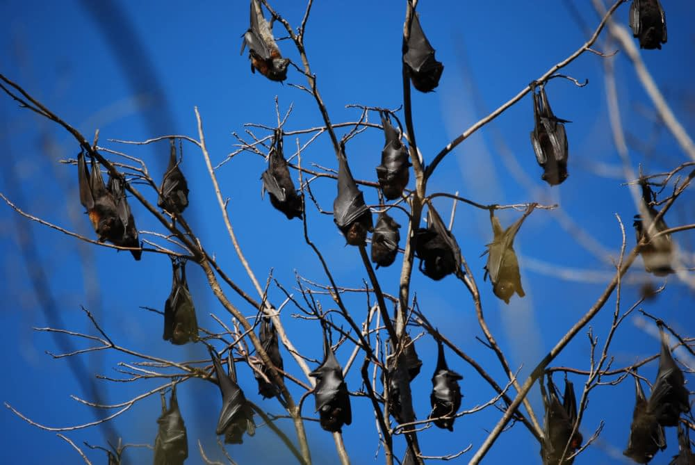 Why Do Bats Hang Upside Down To Sleep?