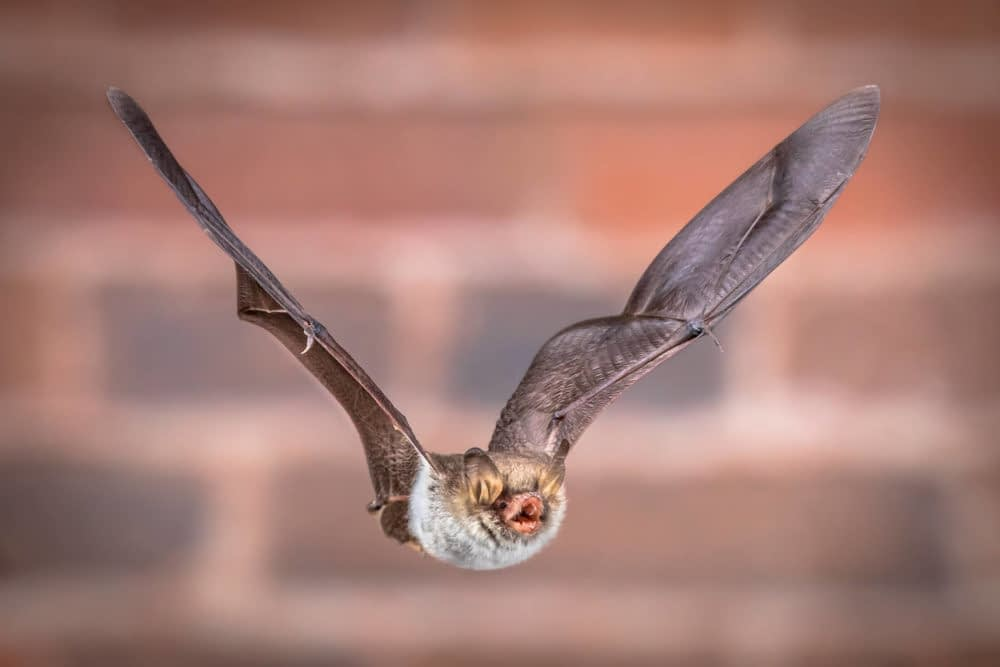 How To Get Bats Out Of The Chimney