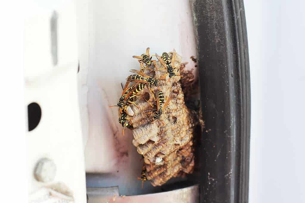 How To Easily Remove Wasps From Your Car