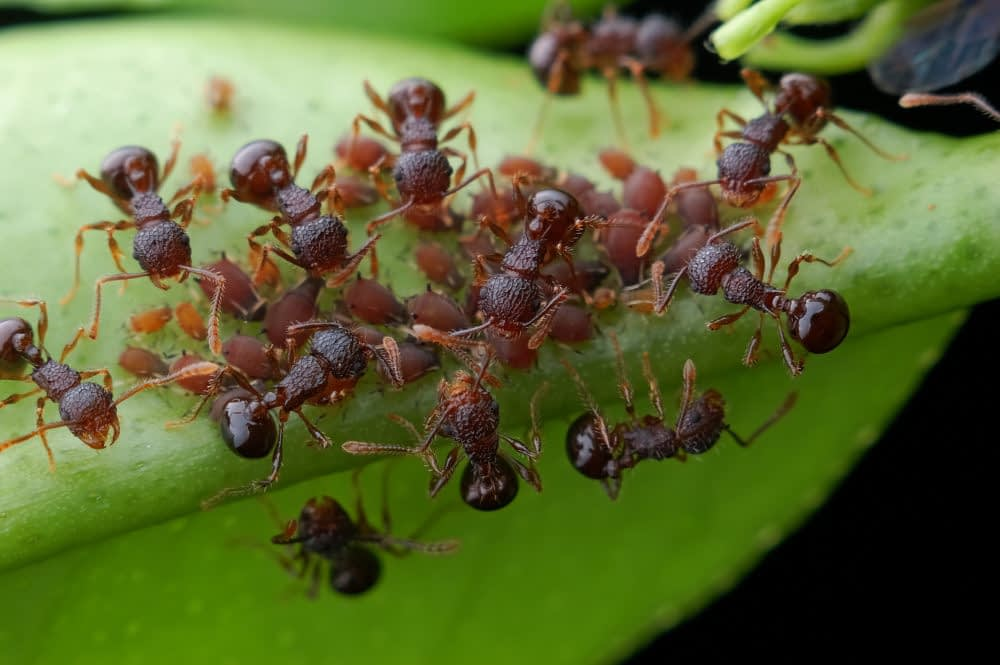 25 Ways To Keep Ants Away From Any Environment