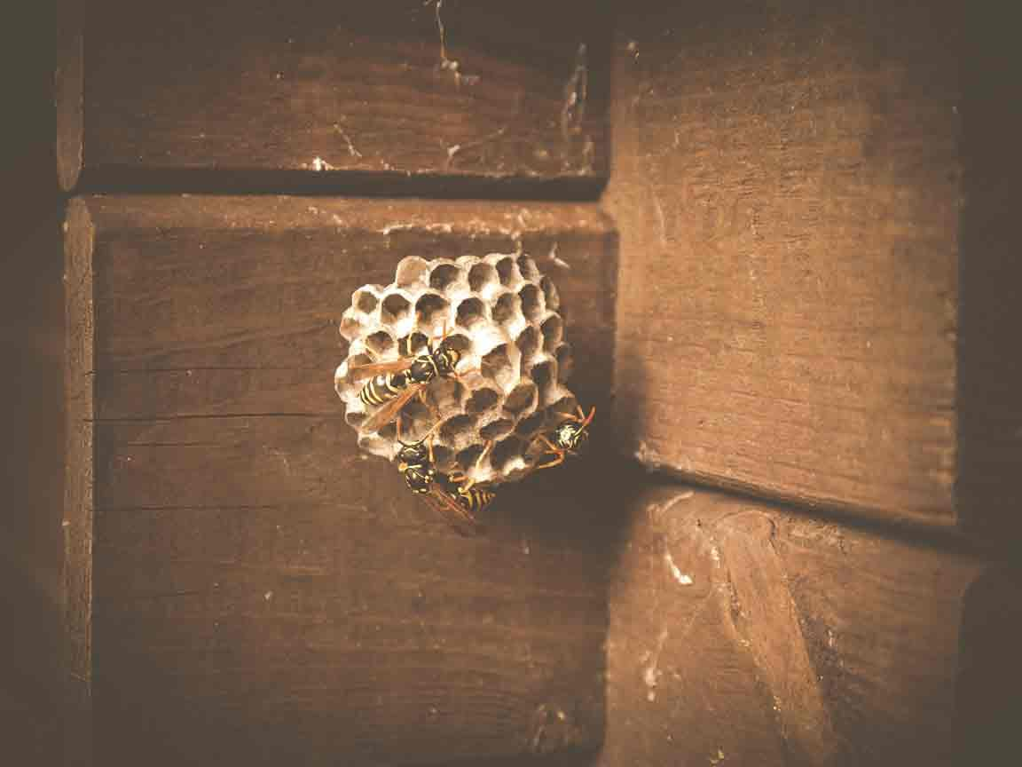 Dealing With A Wasp Nest On Your Property Or In Your Home