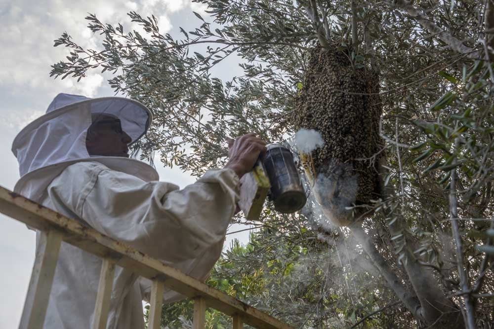 When Should You Call a Professional Beekeeper?
