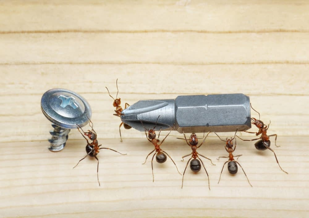 How to Keep Ants Away from Your Living Room