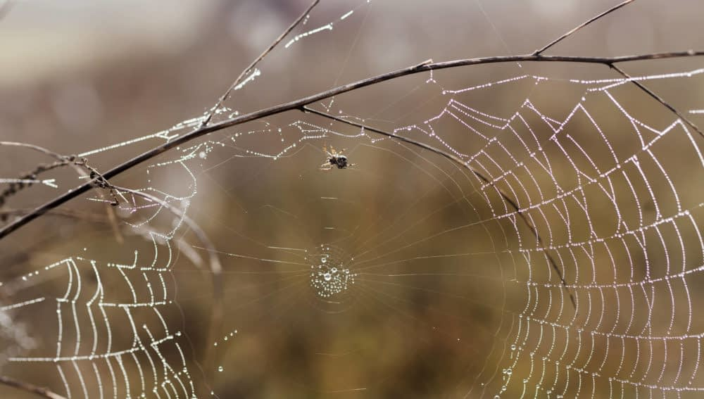 How Do Spiders Survive Winter Without Hibernating?