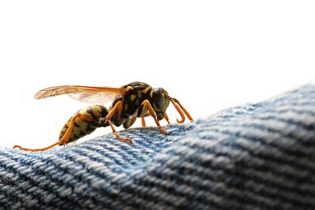 Can Wasps Sting Through Clothing?