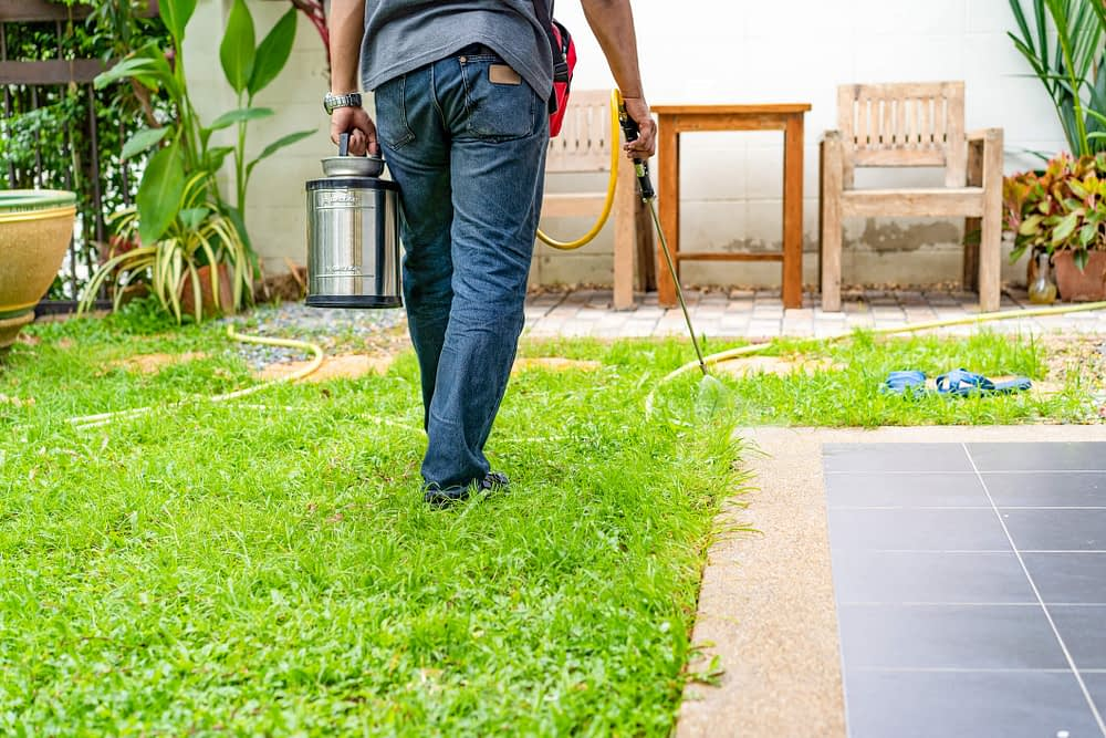 When to Call Professional Pest Control Service?
