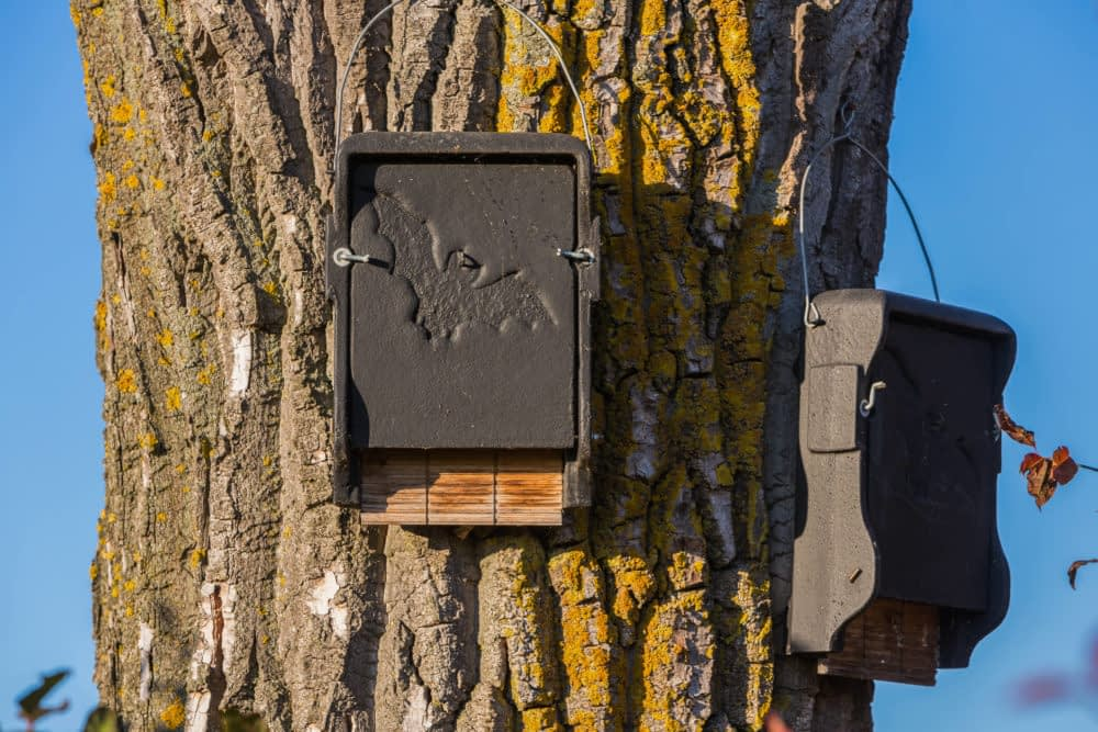 Should You Install a Bat House?