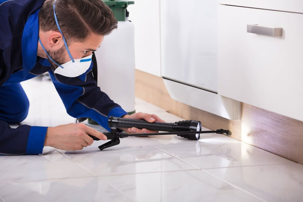 Why Hire a Pest Control Professional?