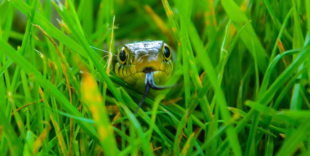 Steps To Take That Actually Work At Keeping Snakes Away