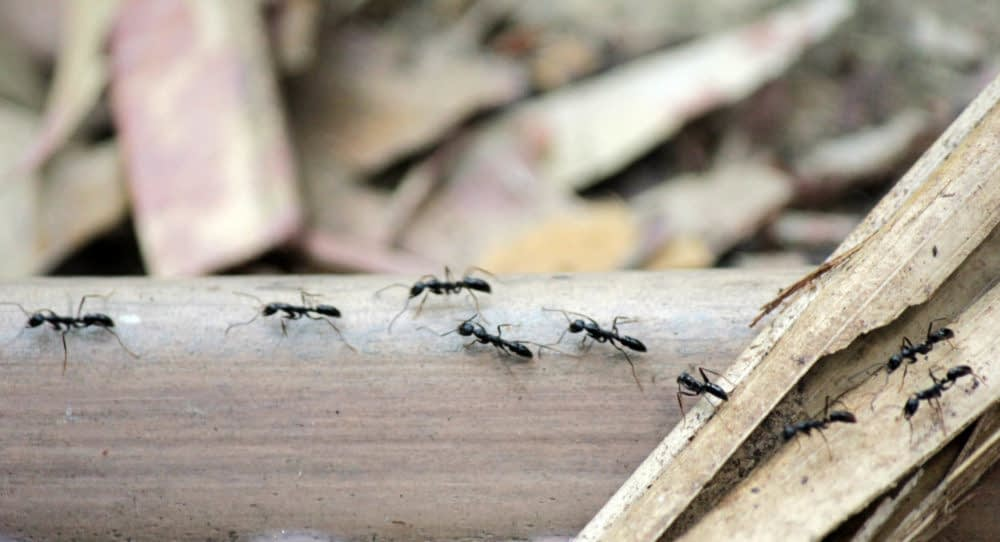 How to Keep Ants Away from Your Garage-Shed
