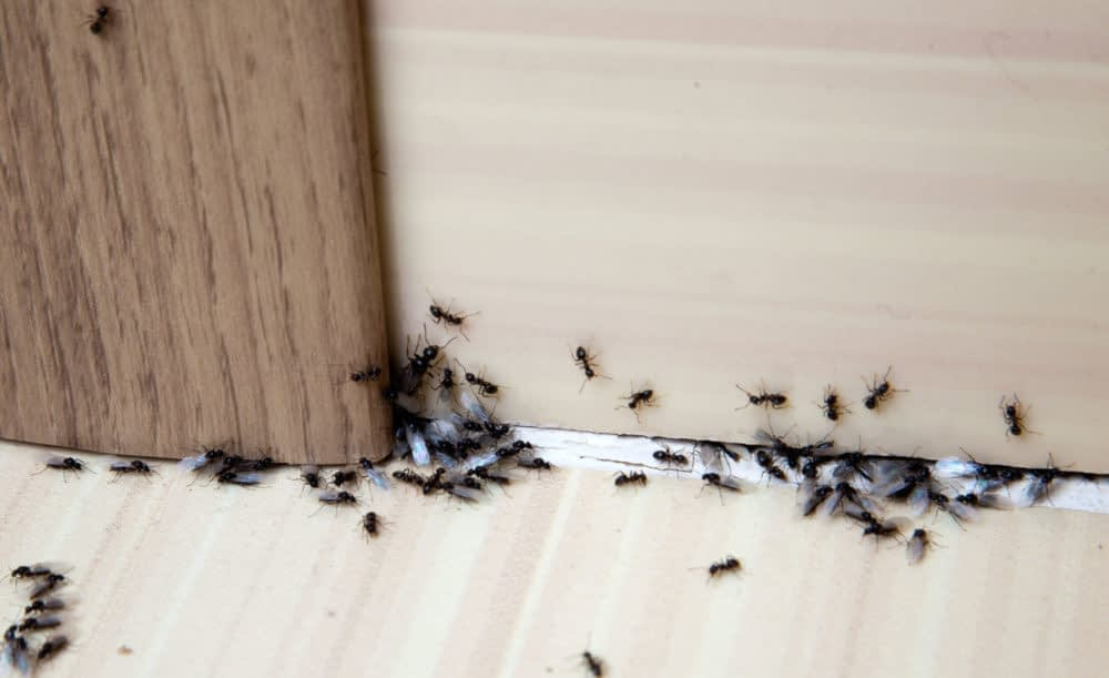 How to Keep Ants Away from Your Bedrooms