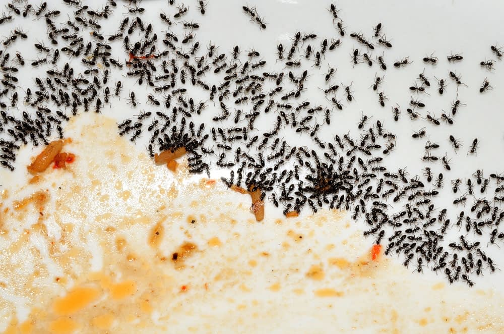 How Long Does Ant Treatment Last?