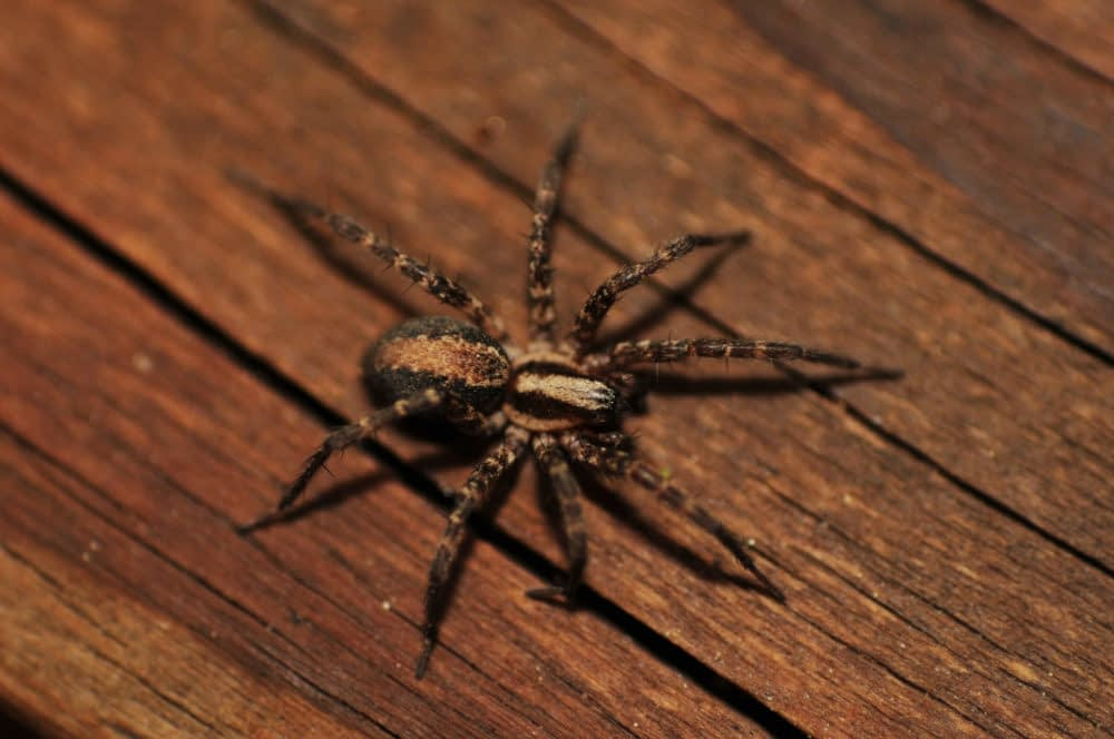 How to Eradicate Spiders During the Winter?