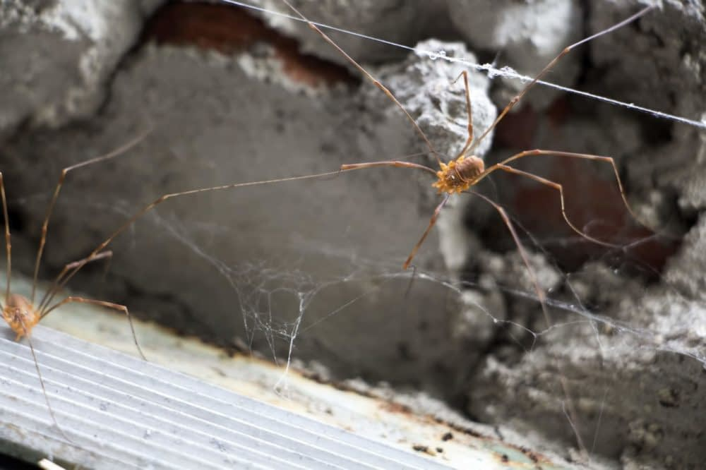 Other Ways to Prevent Spider Infestations