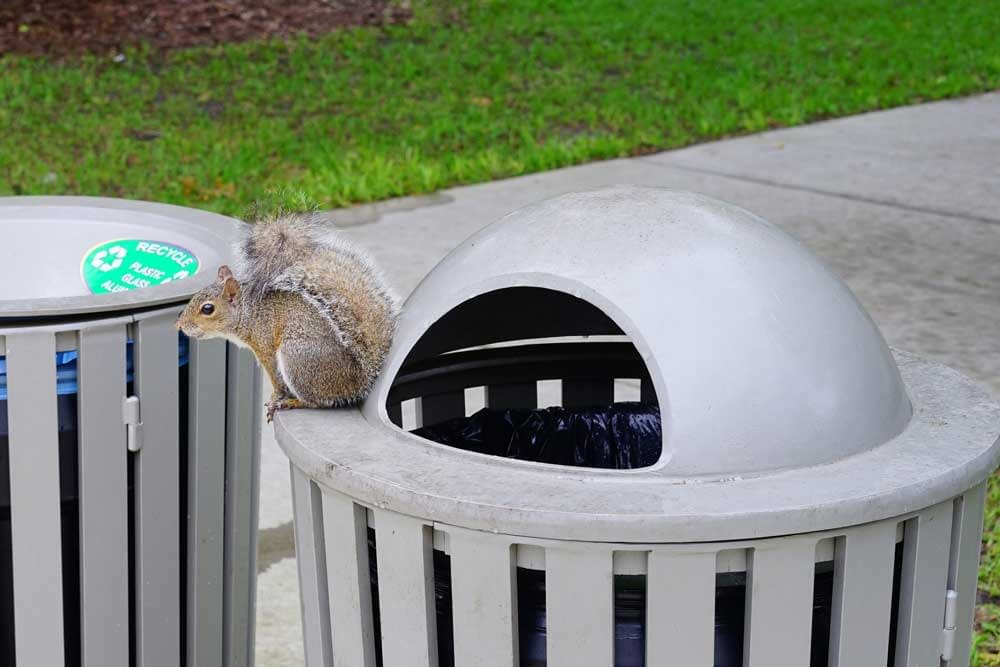 How Do You Repel Squirrels Naturally?