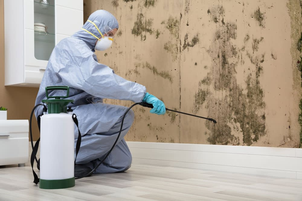 How Long Does Pest Control Treatment Normally Last?