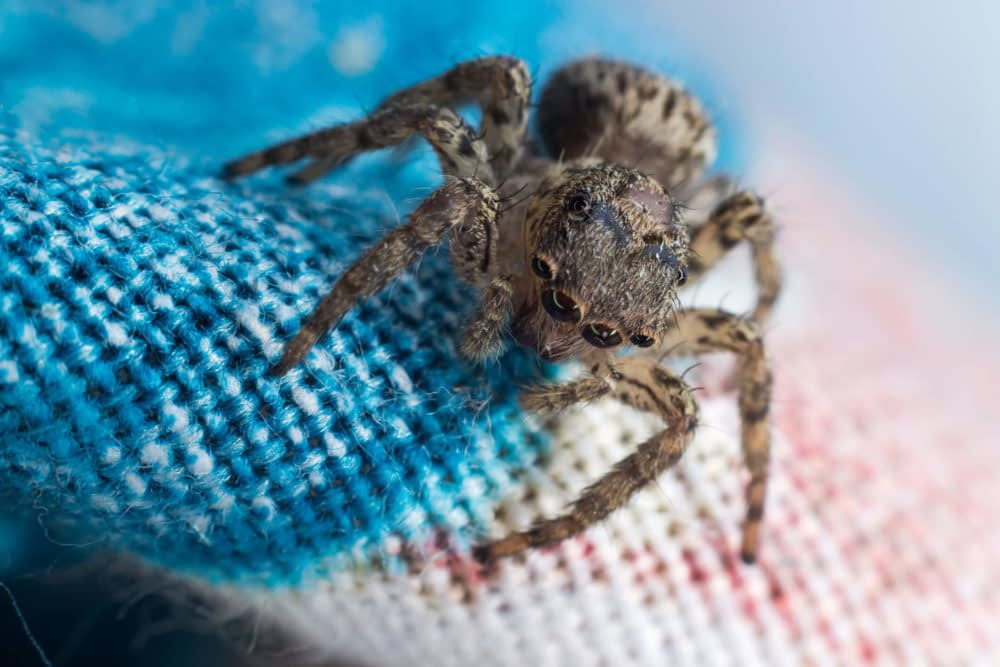Can a Spider Infestation Happen During the Winter?