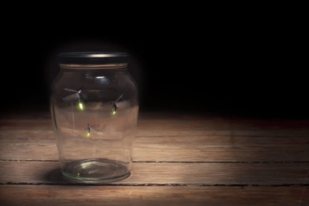 How Can You See Fireflies?
