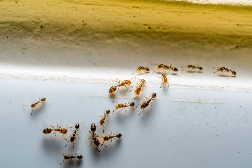 How to Keep Ants Away from Your Basement or Attic