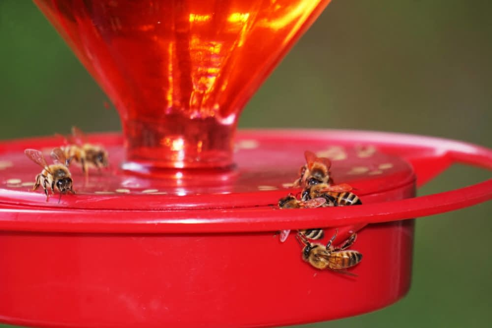 What Are the Natural Ways to Keep Bees from Invading the Hummingbird Feeder?