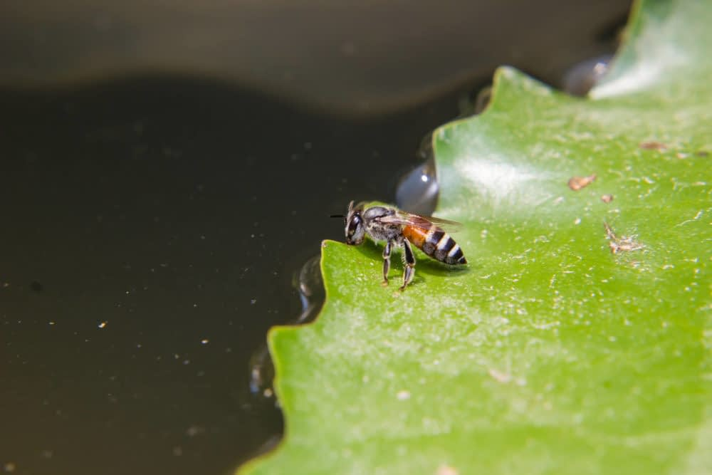 Will Bees Fly on Water?