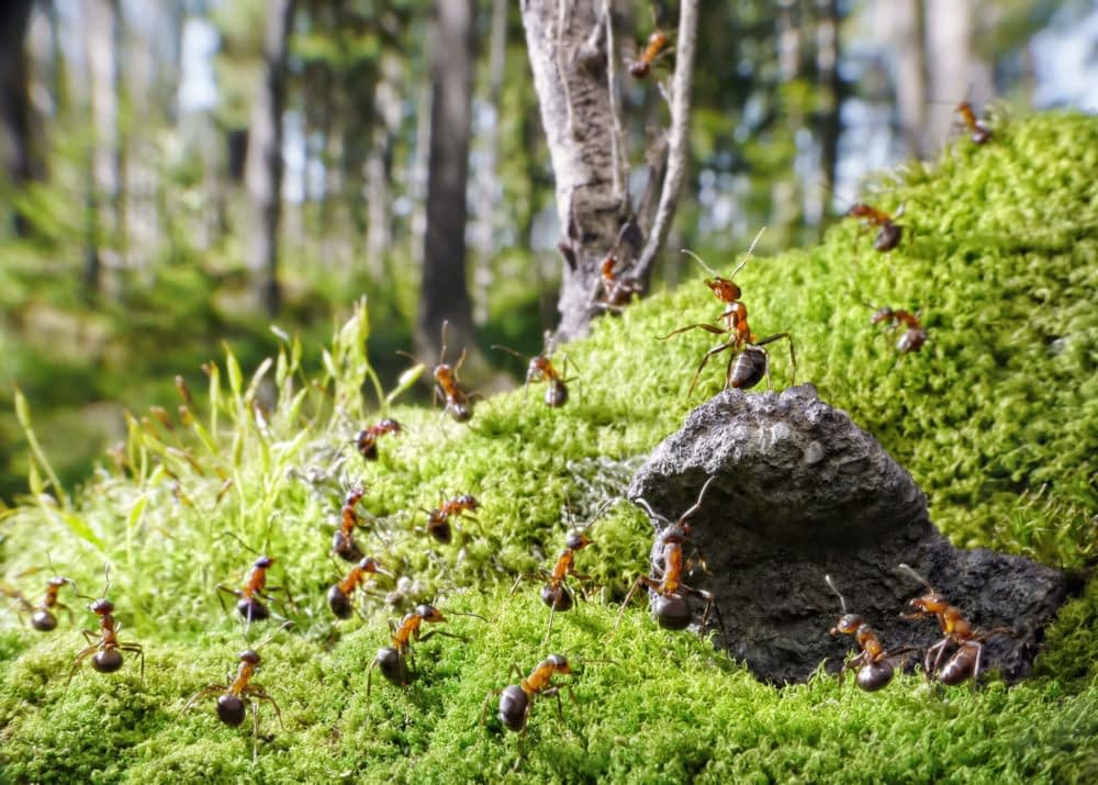 How to Keep Ants Away from Your Patio-Garden