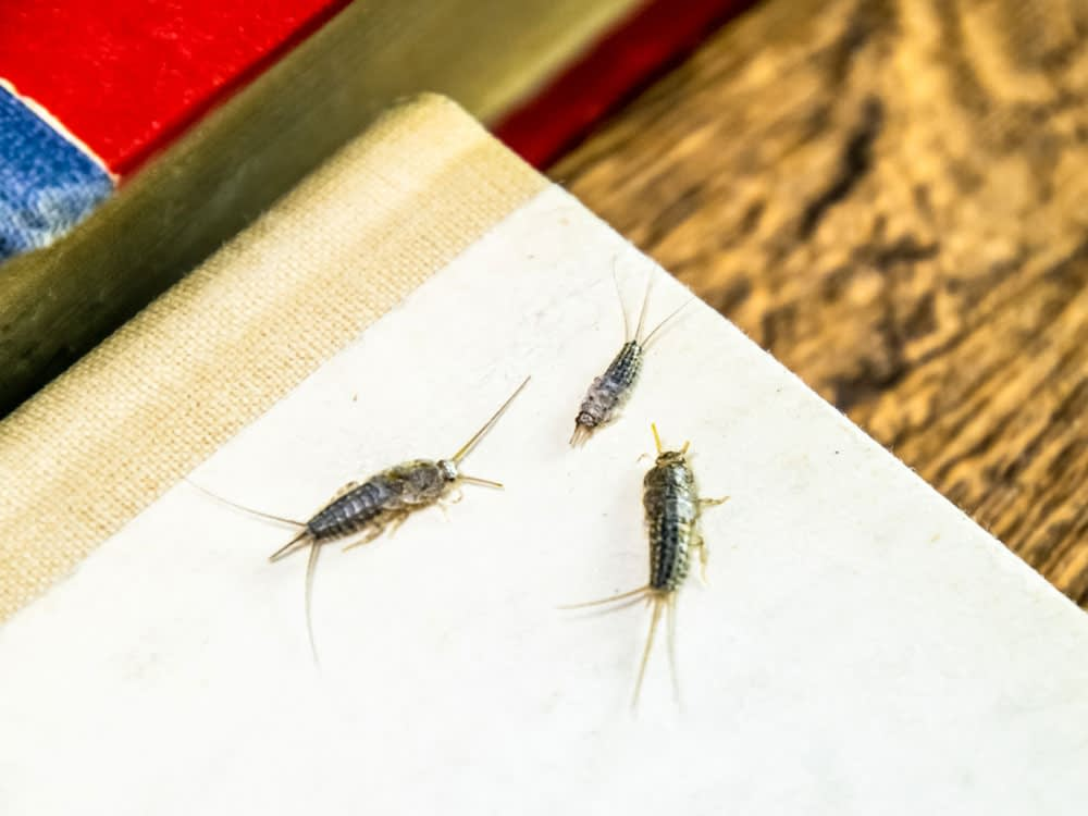 How To Get Rid of Silverfish and Keep Them From Coming Back