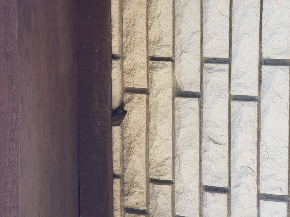 Why Are Bats in My Chimney?