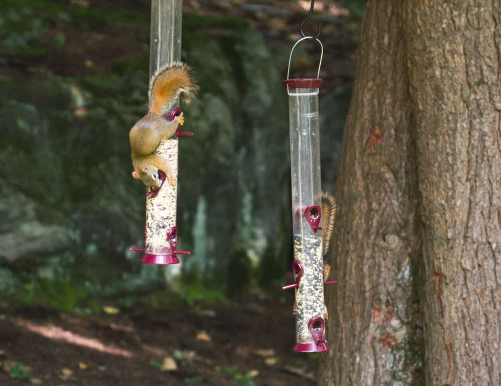 If You Have a Hanging Bird Feeder