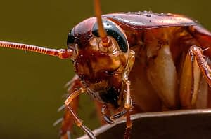 Why Are Cockroaches Dangerous?